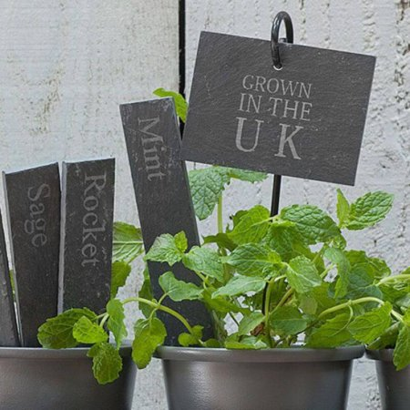 Grown in the UK Plant Tags in situ
